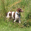 dog in high grass
