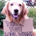 photo of dog wilson