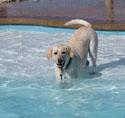 photo of dog cassidy