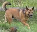 photo of dog sadie
