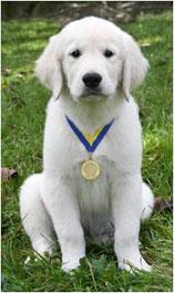 Champion Puppy!